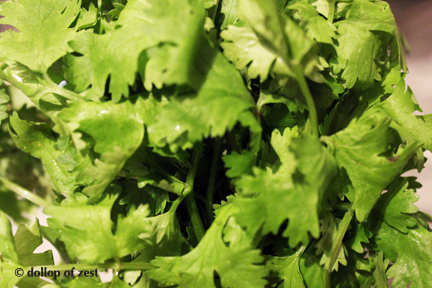 cilantro for black bean and chorizo soup